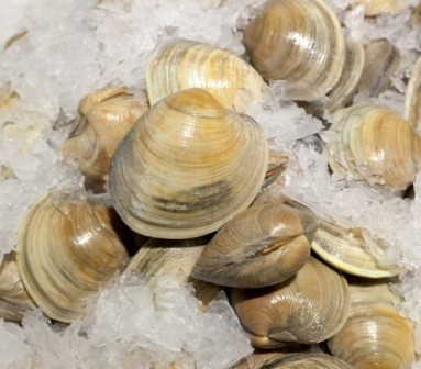 St Ours uses fresh clams in our Clam Broth